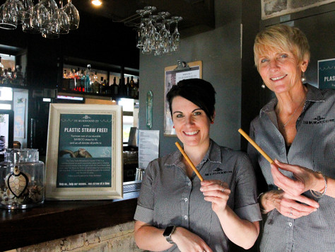 Burwood Inn Merewether decides turtle deaths are the last straw