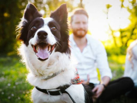 This Sunday is Dog Day 2019 at Honeysuckle Hotel...