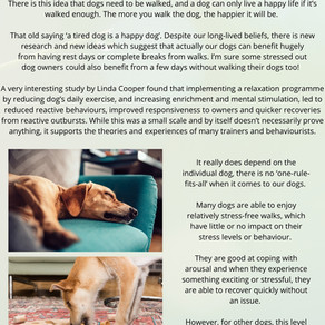 The importance of Rest Days for dogs