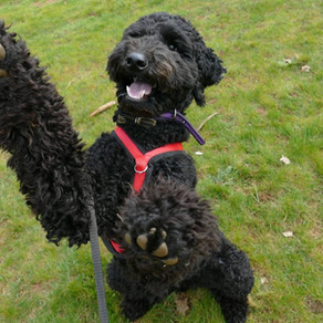12 top tips to stop your dog jumping up