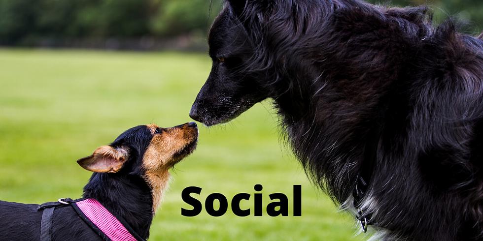 Practical Social Skills Workshop