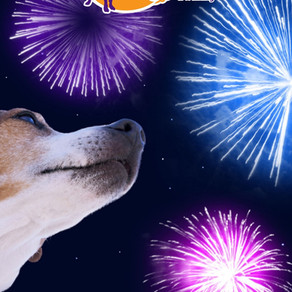 Help! My dog is scared of Fireworks!