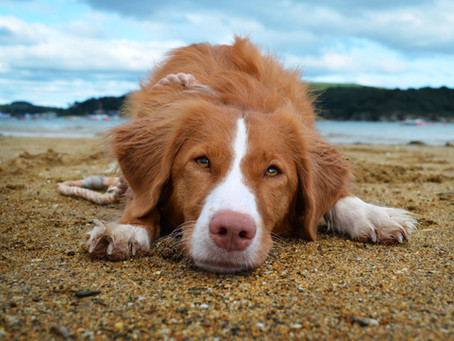 Understanding arousal in dogs