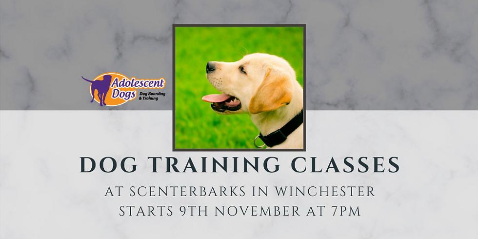 Dog Training Foundation Skills