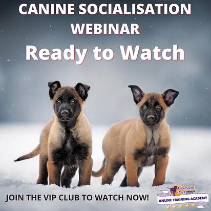 SOCIALISATION WEBINAR LIVE NOW (2).png