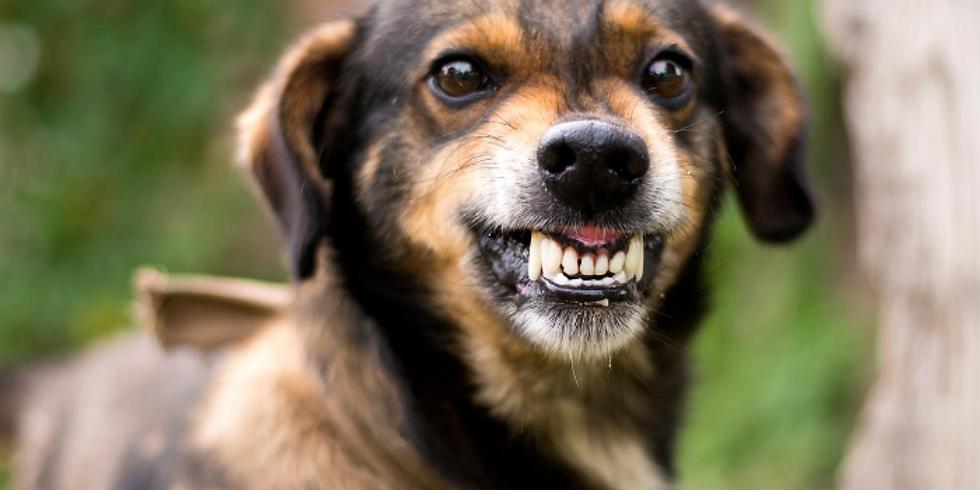 Online Dog Reactivity Clinic Starts 14th September