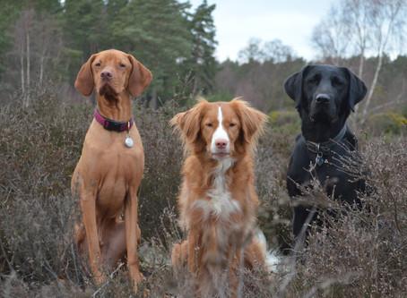 Should you use Doggy Daycare?