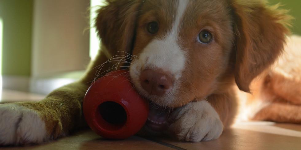 Puppy Problems - No Problem!