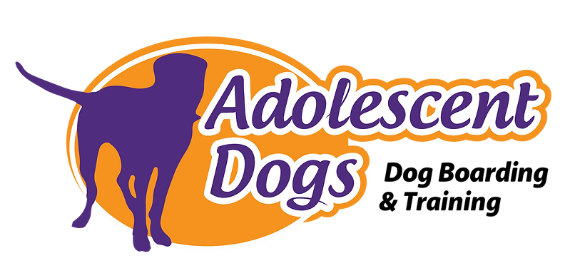 Adolescent_Dogs_Recreation_PNG_with_Tran