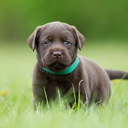 Copy of FREE PUPPY BITING GUIDE (1).png