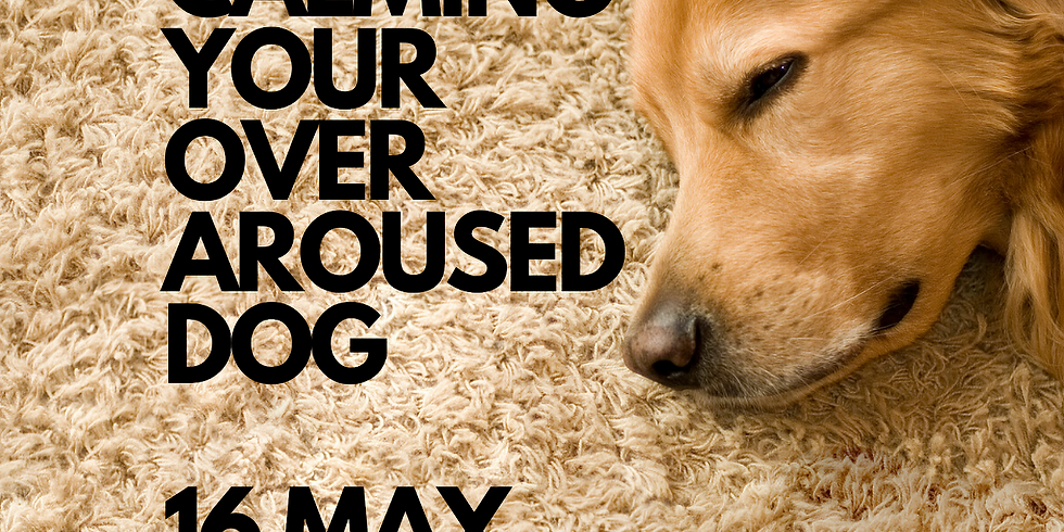 Calming your over aroused dog