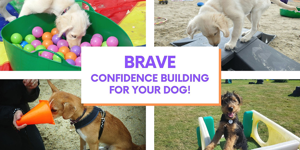 BRAVE - confidence boost & socialisation