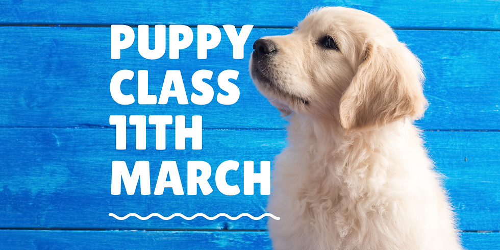 Puppy Classes Guildford - 6 Week Course