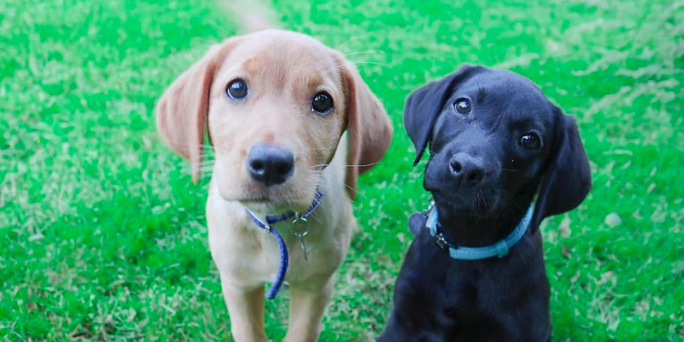 Puppy Classes Winchester - 6 Week Course