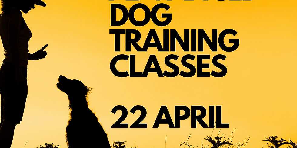 Advanced Dog Training Classes