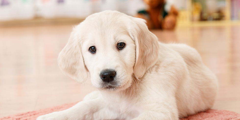 Online Puppy Clinic July