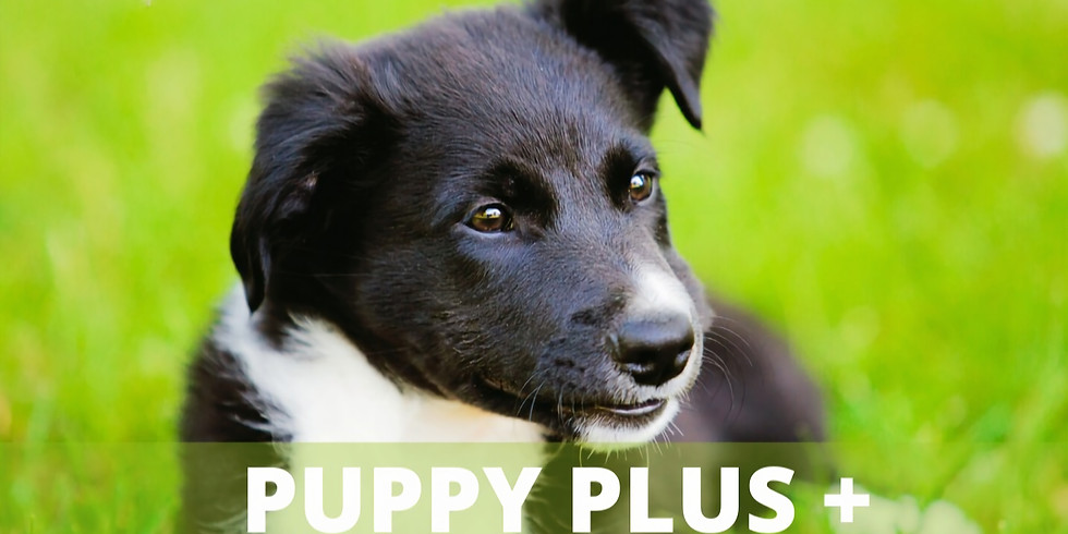 Online Puppy PLUS Starts 10 Aug. Last chance to join is 16th