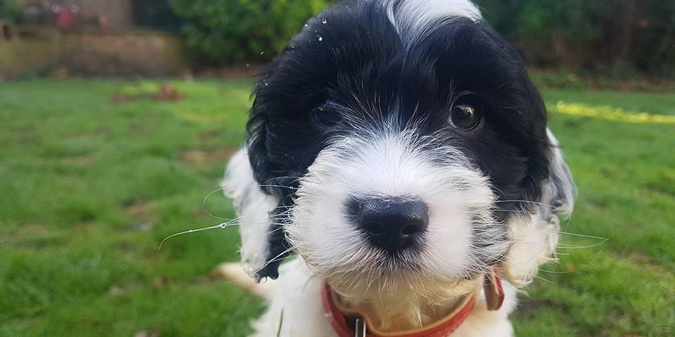 6 Week Puppy Class