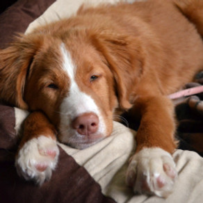 Managing our dog's arousal