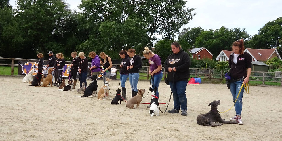 Career As A Dog Trainer