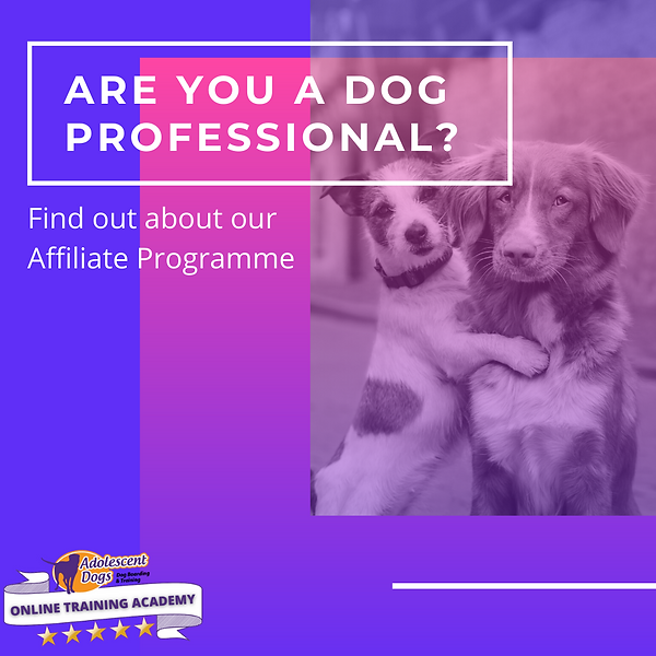 ARE YOU A DOG PROFESSIONAL_.png