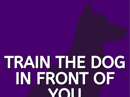 Train the dog in front of you, not the breed?