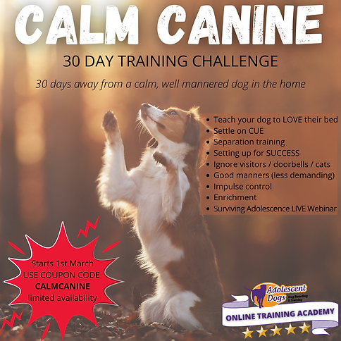 CALM CANINE (2).png