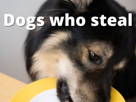 Solutions for dogs who steal and counter surf