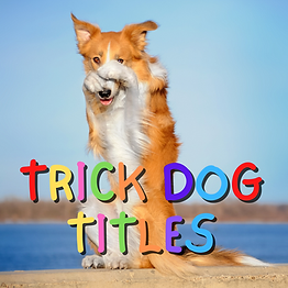 Copy of HAVE FUN WITH YOUR DOG TRICK DOG
