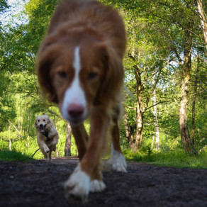 Dog to dog interactions on walks