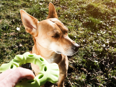 Is your dog being naughty or does he just not understand you?