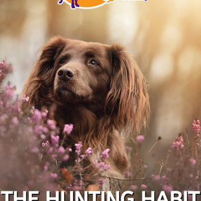 How to stop your dog hunting