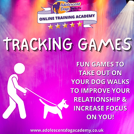 www.adolescentdogacademy.co.uk (1).png