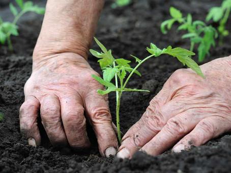 Leadership and Gardening
