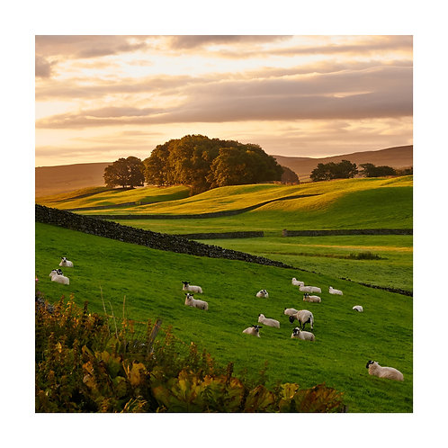 Pk of 4 Square Assorted Photographic Greetings Cards - Wensleydale Valley