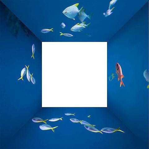 fisk-rum 002.jpg