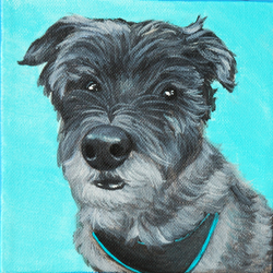 A Cairn terrier named Oz.png