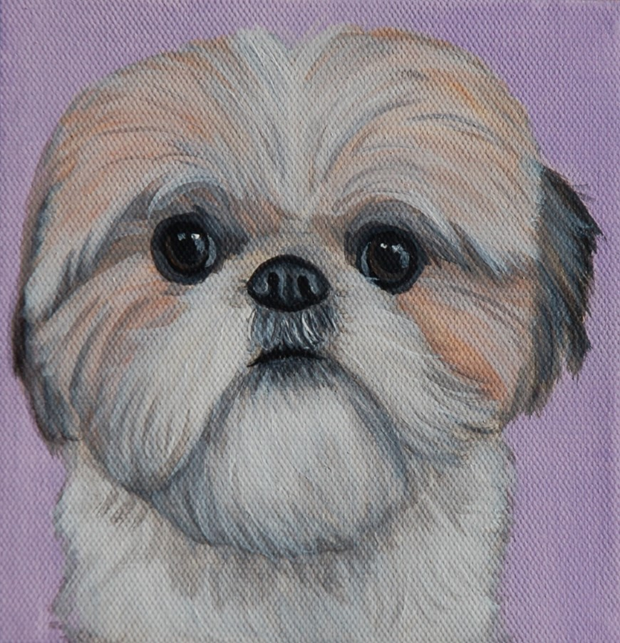 shih tzu painting portrait on canvas.jpg