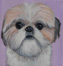 shih tzu painting portrait on canvas.jpg