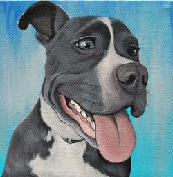 blue nose pitbull custom pet portrait painting.jpg