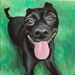black dog smiling in grass.jpg