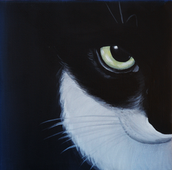 black and white cat close up painting
