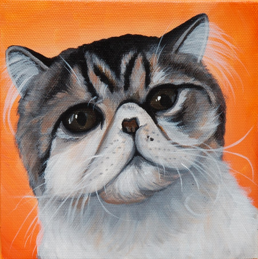 exotic shorthair cat painting on canvas