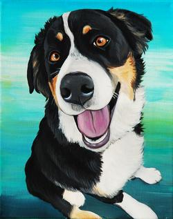 pet portrait burnese mountain dog