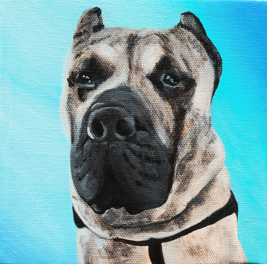 cane corso custom pet painting.png