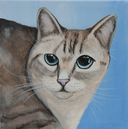 kitty cat portrait for chewy.com