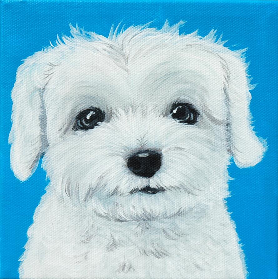 Lilttle maltese portrait painting.png