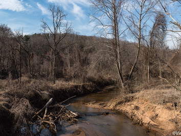 Panoramas in the Woods: End of Winter