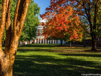 A Walk Around The Lawn: Fall Colors