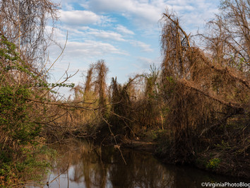 Spring 2021: A Walk Along The Creek (1)